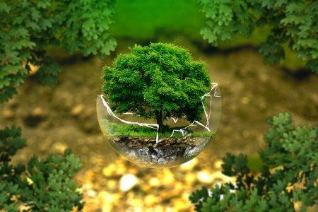 Educação Ambiental: A importância nas escolas